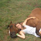 horse246