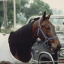 BUCKEYE HARNESS HORSE LOVERS